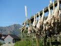 5 miljoner norrmän kan inte ha fel, torkad fisk är mums