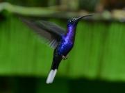 Cool kollibri