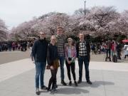 Sakura i Uenoparken
