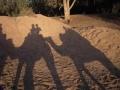 Kamelkaravan
