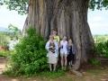 Under apbrödsträdet
