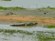 Konrad Krokodil