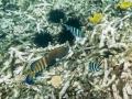 Sjöborrar och fiskar