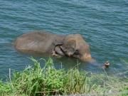 Elefantbad