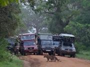 Övergångställe för leoparder