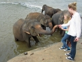 Elefantbad i Pinnawala