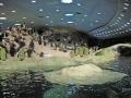 Pingevingar huttrar
