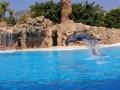 Hoppiga delfiner