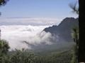 Dimma i dalen