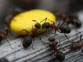 Myror & Påskgodis