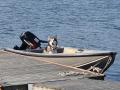 Varga gillar att hänga i båten