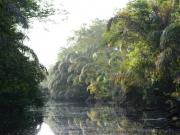 Redig regnskog