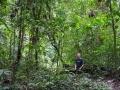 Uffe i djungeln