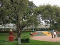 Dag Hammarskjölds träd