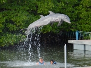 Delfinerna hoppar högre än Erik