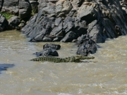Krokodilaction
