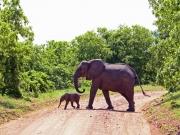 Lillefant är ute och går med mamma