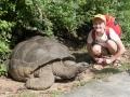 Vild jättesköldpadda och dito Lotta