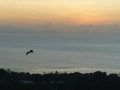 Flygande hund i solnedgång, Mahe långt bort i horisonten