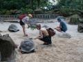 Sköldpaddsmatning i botaniska trädgården