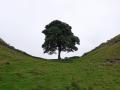 Hadrianus mur med mullbärsträd